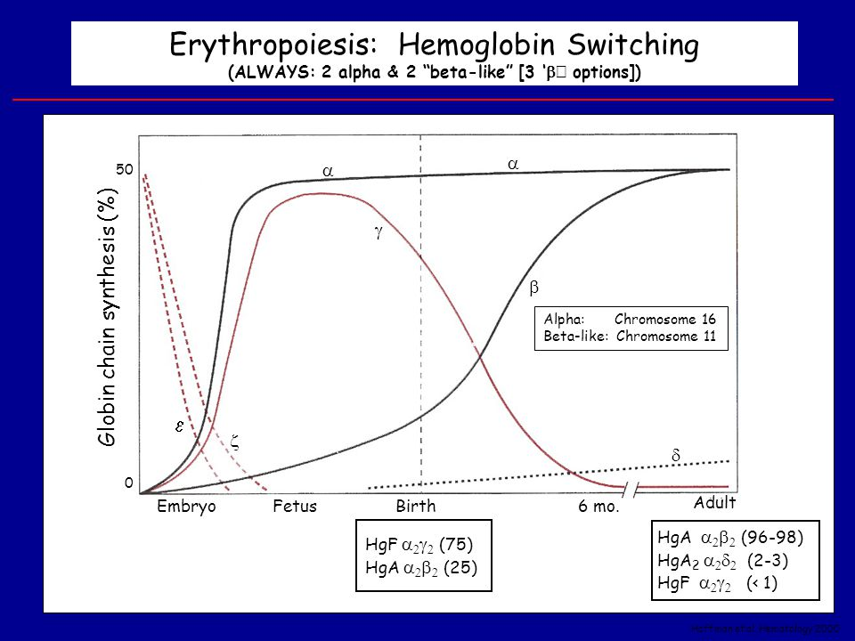 Erythropoiesis: Hemoglobin Switching (ALWAYS: 2 alpha & 2 beta-like [3 'b' options])